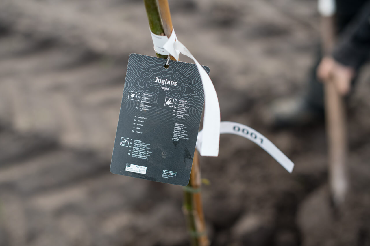 Eerste boom in het voedselbos Polderevents